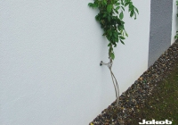 Gevelbegroeiing-@1-2